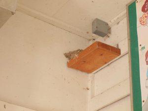 燕の巣。来年からどうなるんでしょうか……