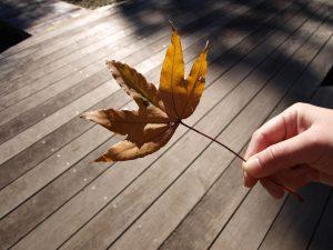 足下にも秋の色