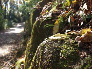 苔と木の葉