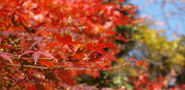 秋といえば紅葉!近所で楽しむ紅葉特集!!<県立座間谷戸山公園>