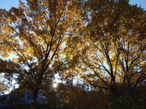 黄色い木漏れ日