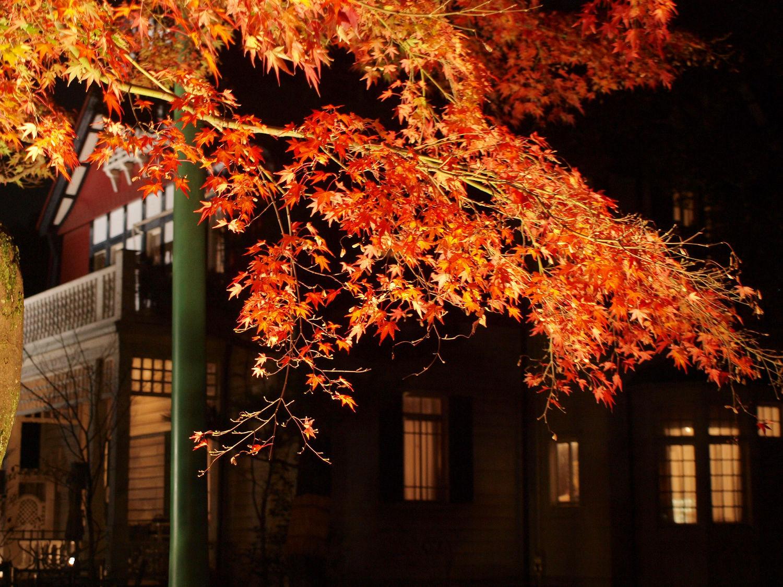 紅葉ライトアップ&千と千尋の神隠しのモデル!「江戸東京たてもの園」